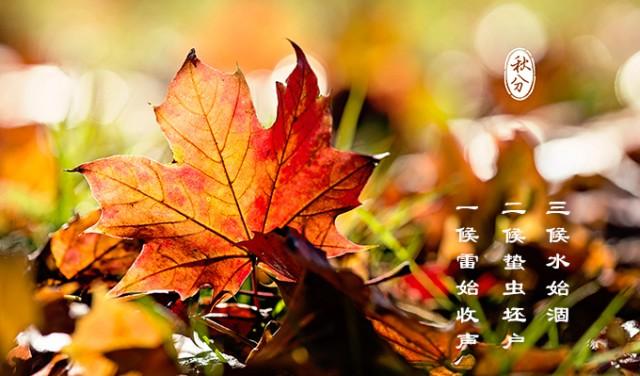 秋分图片手绘简易